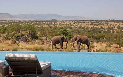 serengeti-dream-classic